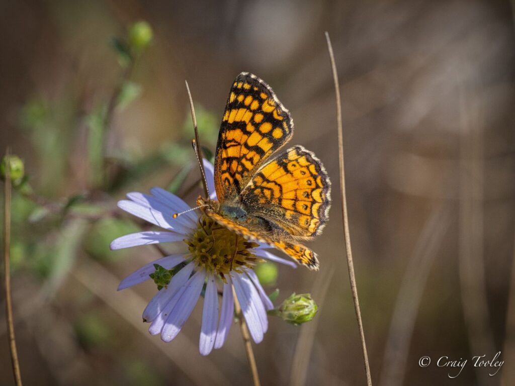 Butterfly on flower, Photo by Craig Tooley