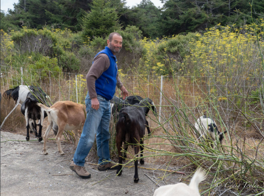 Dave Shpak with Goats